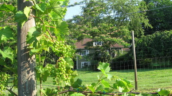 Arcady Vineyard B&B